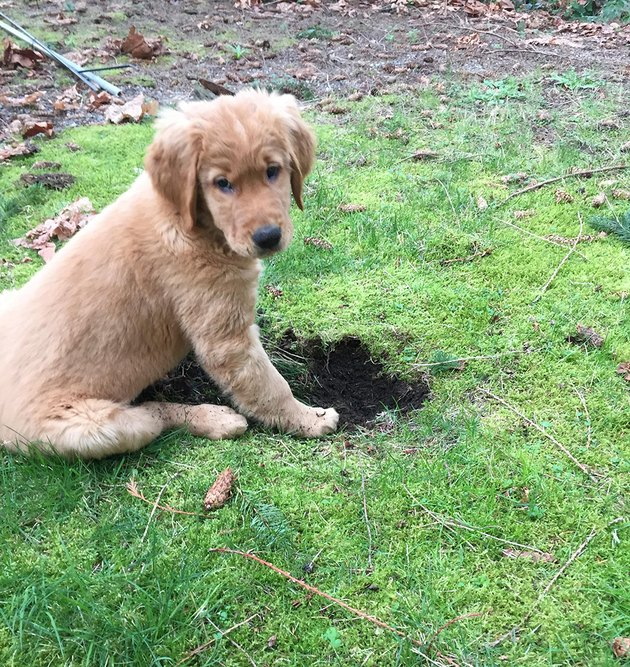 Dog next to dark hole in green grass.