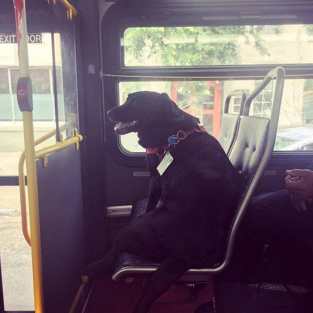 People on Reddit Are Freaking Out About This Dog Who Apparently Rides the Bus Alone to the Dog Park Every Day