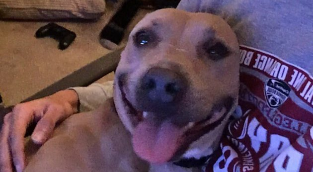 Headtilting good boy sparks epic Twitter thread with real talk