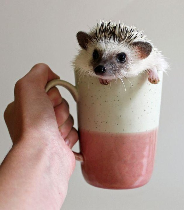 9 Reasons Why Hedgehogs May Just Be the Cutest Animals Ever