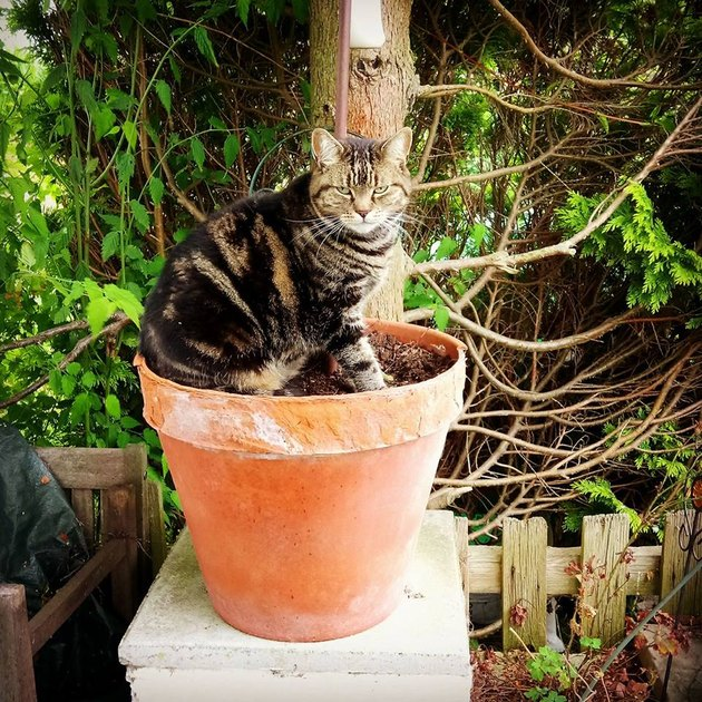 Cat sitting in planter looking mad