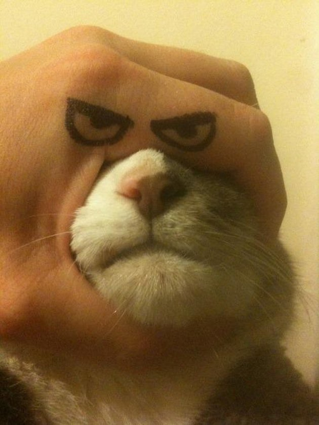 Eyes drawn on hand wrapped around cat's head