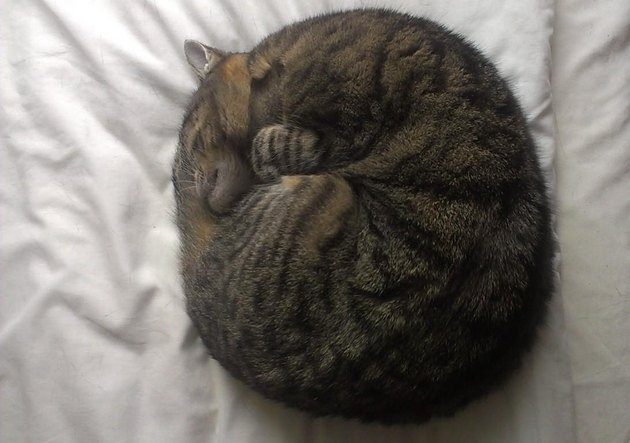 Cat curled in a ball.