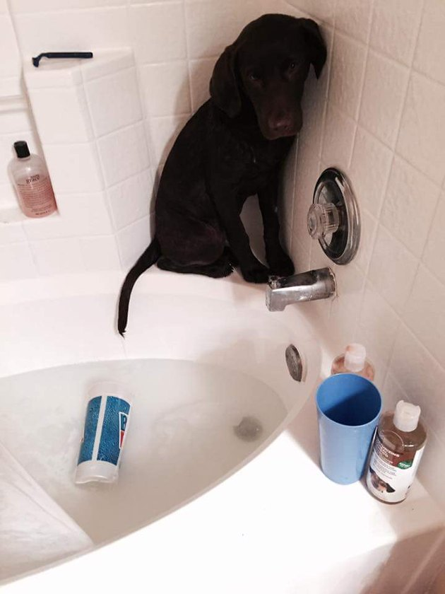 Dog balances on edge of bath.