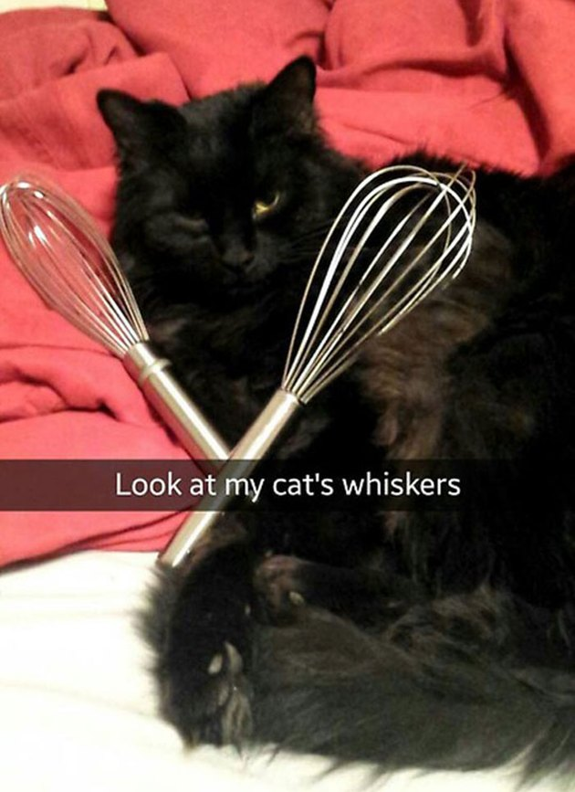 15 hilarious Snapchats about cats and kittens that will never not be funny