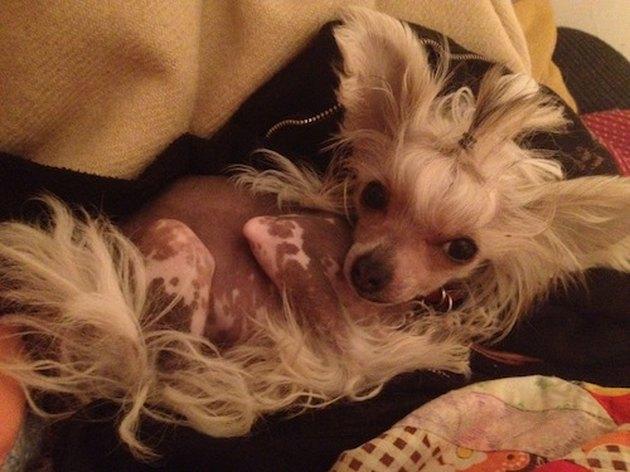 Sexiest Dog Boudoir Photos You've Ever Seen