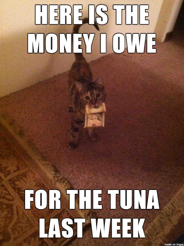 "Cat holding money with caption: ""Here is the money I owe for the tuna last week."""