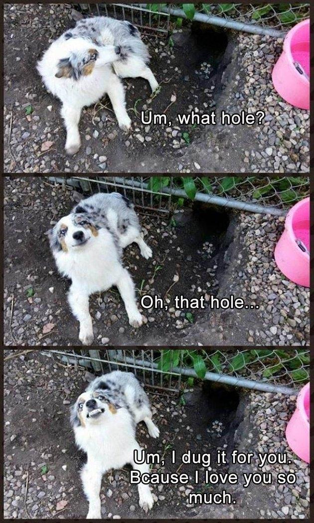 Dog sits next to hole under fence.