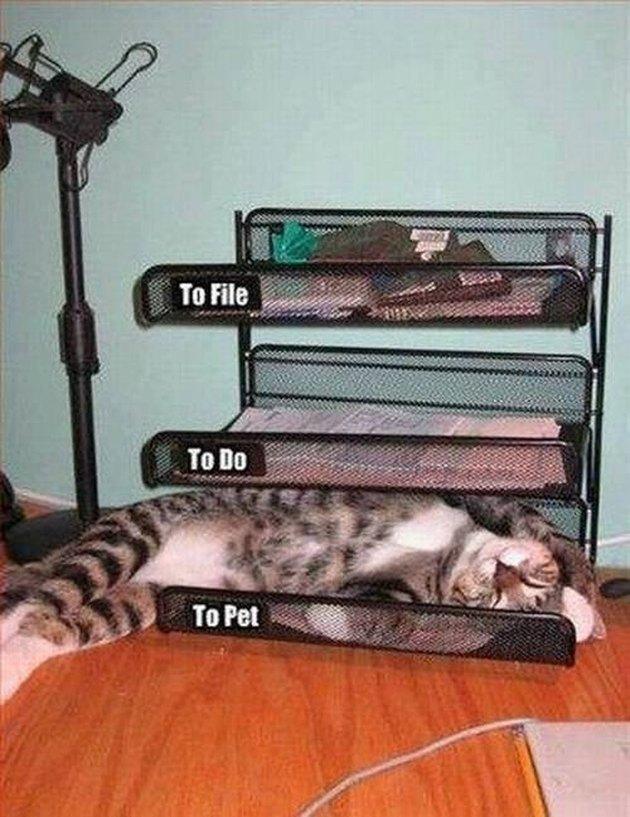 To Pet Cat