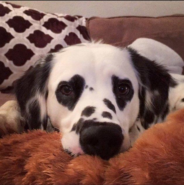 heart eyes dog swoon