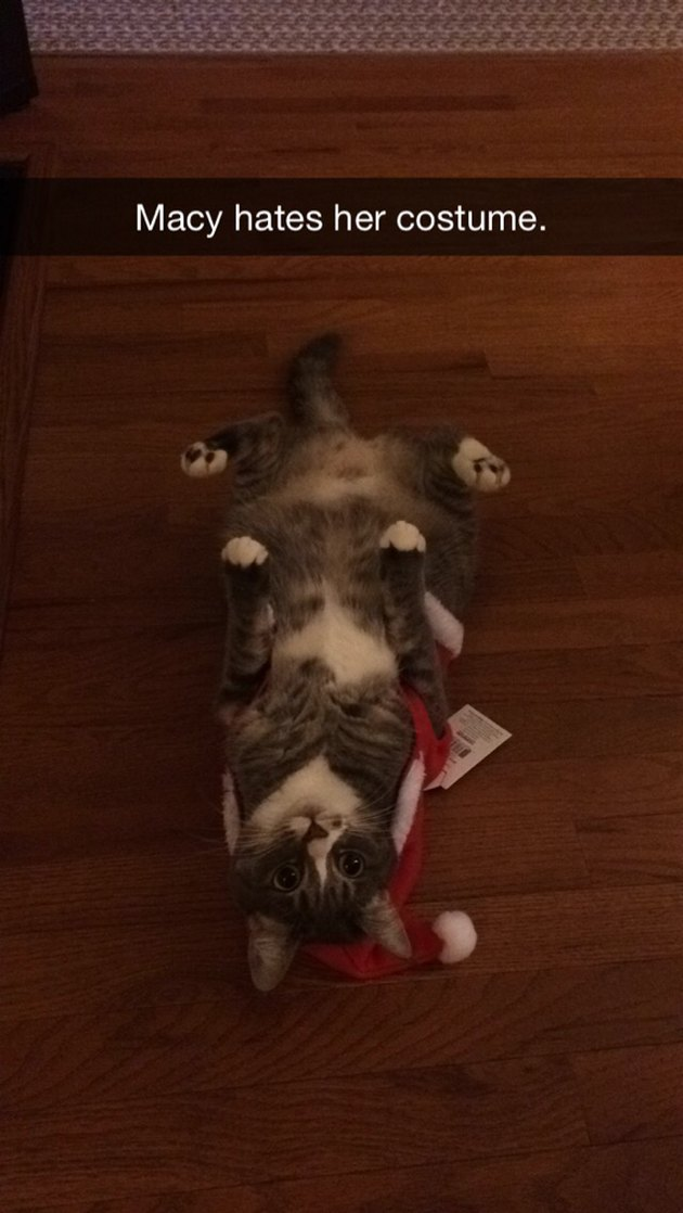 Cat hating her Christmas costume