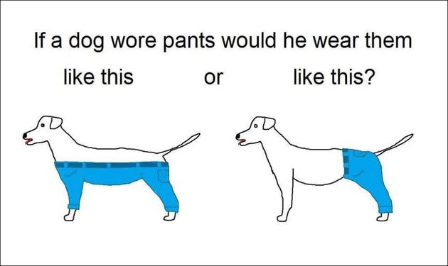 We know now how dogs actually wear pants IRL