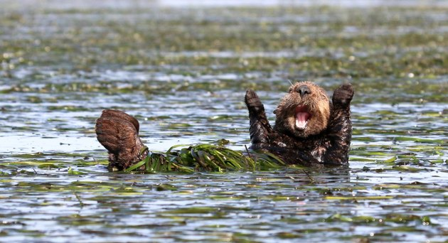 Prepare to LOL because the funniest wildlife photos of 2017 have been revealed