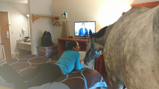 horse and lindsey watching tv
