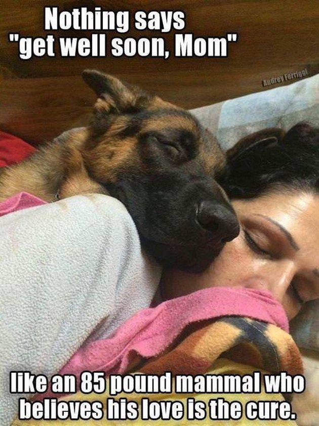 Dog and woman cuddling
