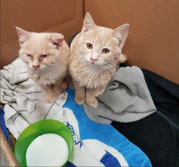 two kitties saved from ice