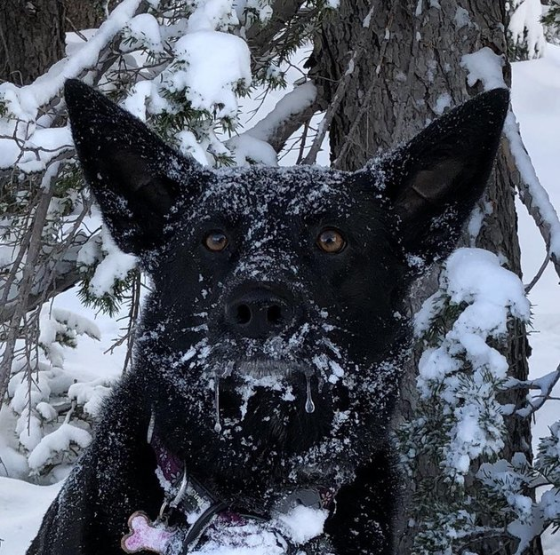 Dog in snow with frozen drool coming out of its mouth.