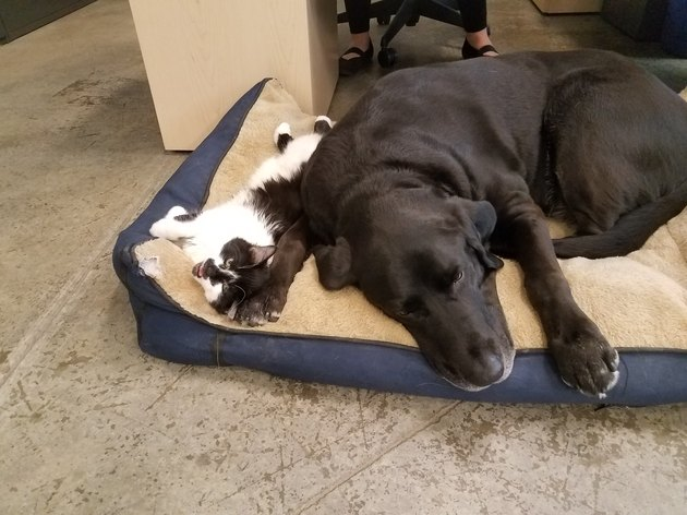 DOG cuddling with a dog