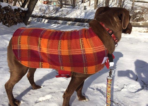 dog in fleece jacket