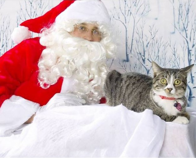 Very startled looking cat posed next to Santa.