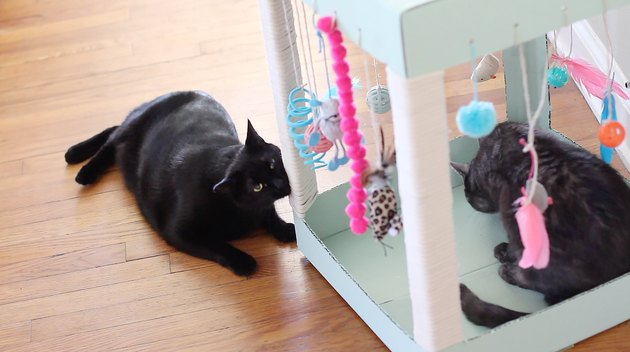 kitty rubbing whiskers on scratching post