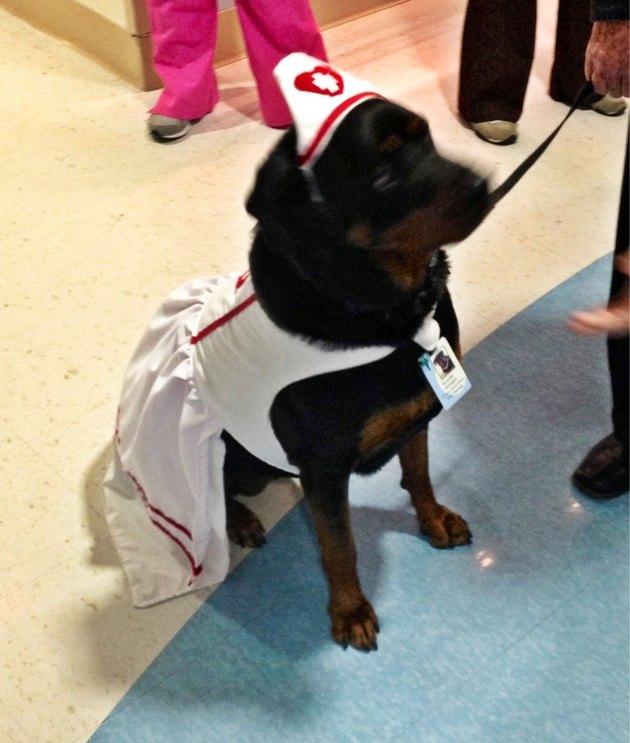 dog nurse