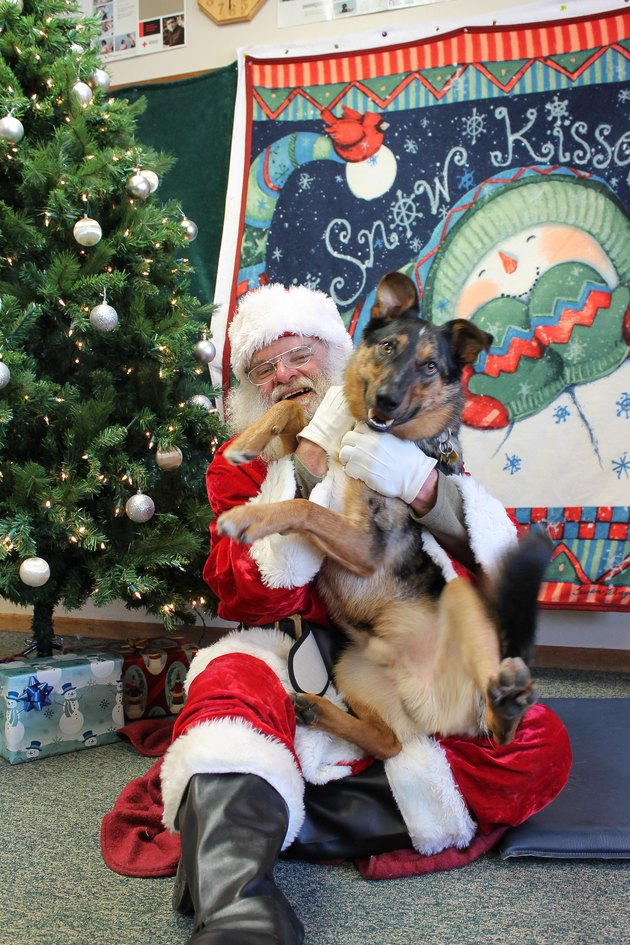 Excited dog sitting on Santa's lap.