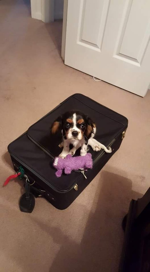 Small dog sitting on suitcase.