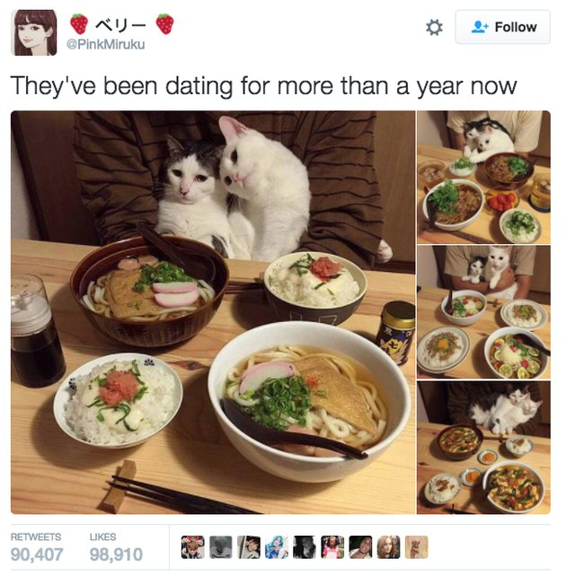 Two cats at a table with food