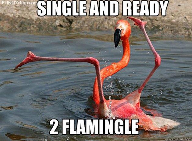 silly flamingo