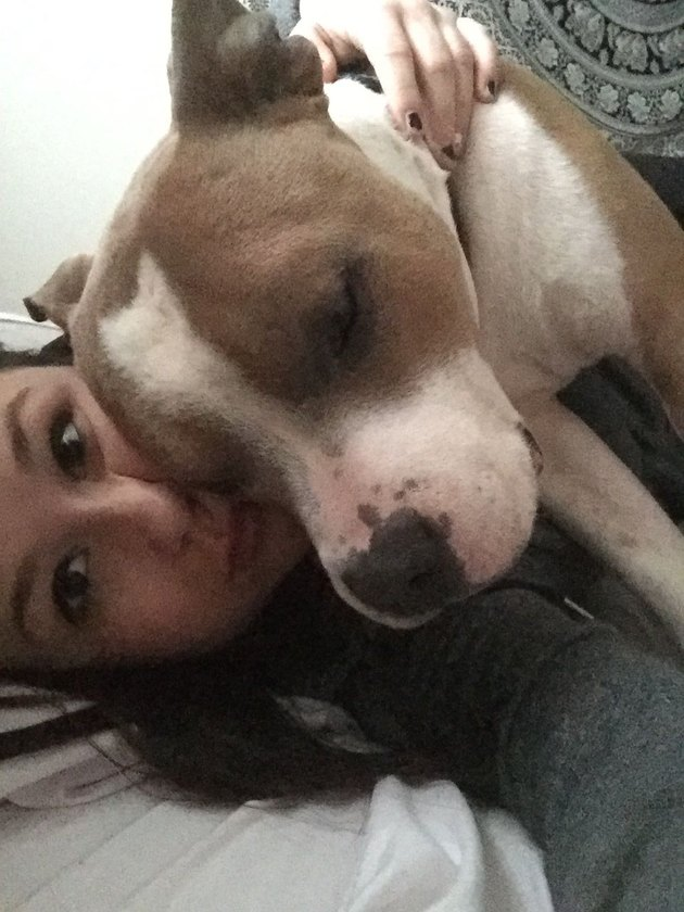 This cuddly pit bull's love for his mom will warm your heart.