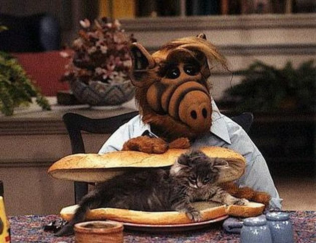 ALF with a cat sandwich