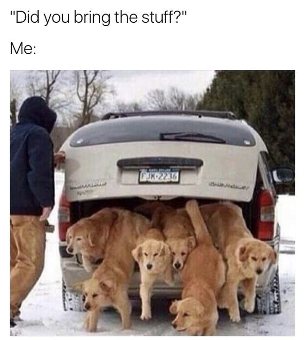 "Photo of six dogs jumping down from the back of a car. Caption: ""You got the stuff?"""