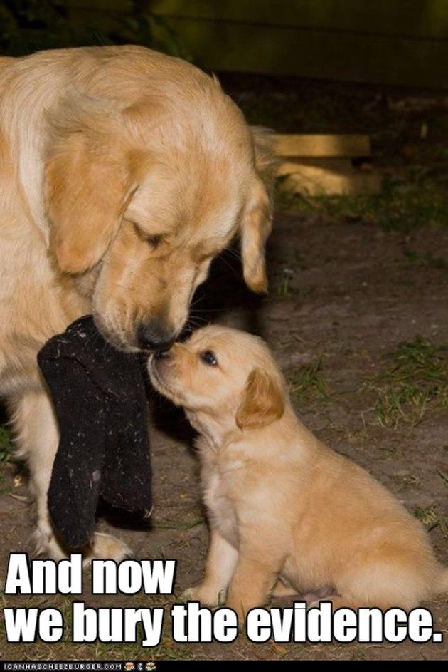 Dog and puppy bury sock.