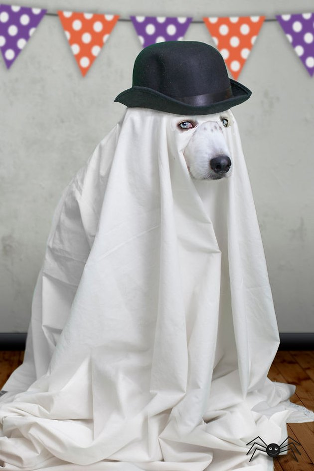 Dog draped in a sheet wearing a hat.