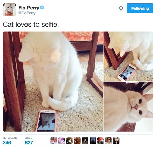 Cat taking selfies
