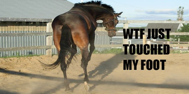 Horse jumping.