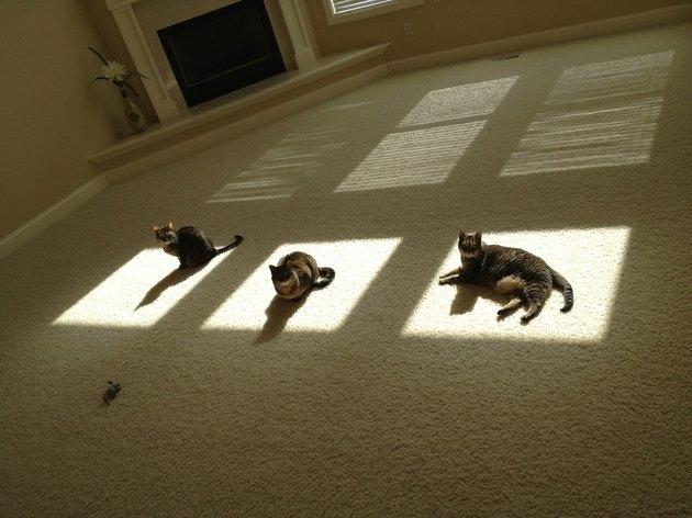 Three cats in three sunny spots.