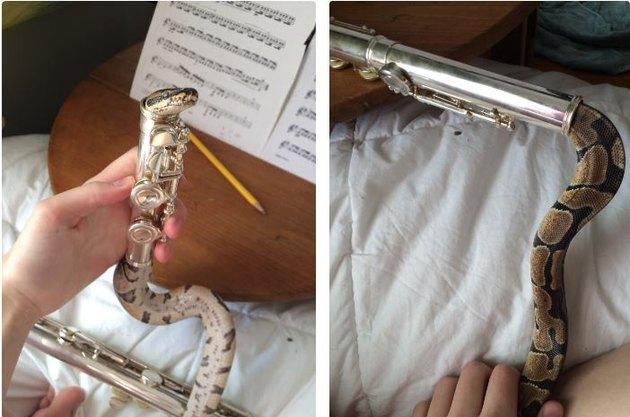 Snake crawling inside silver flute.