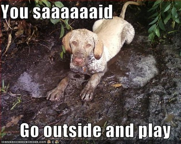 Dog sitting in mud.