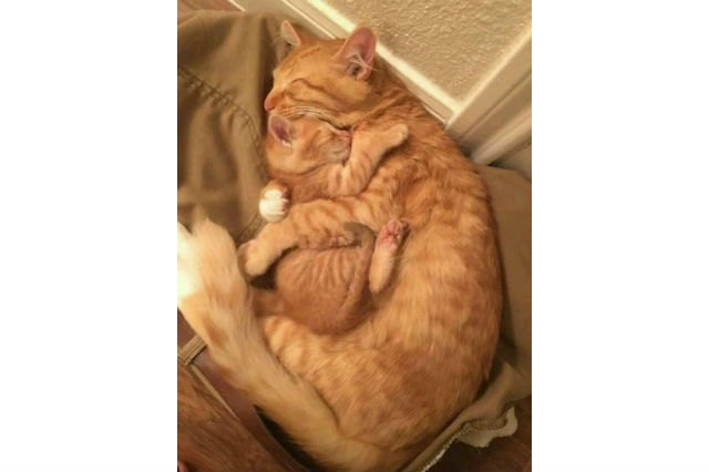 24 photos of cats hugging other cats that will squish your heart