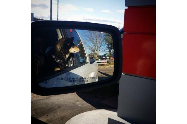 24 dogs doin a drive-thru