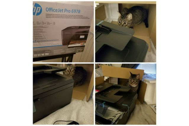 Cats react to printers and fax machines