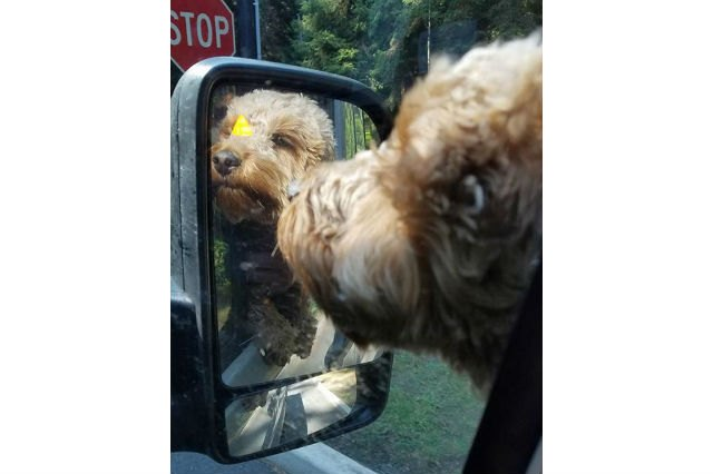 Dogs reacting to mirrors will make you LOL