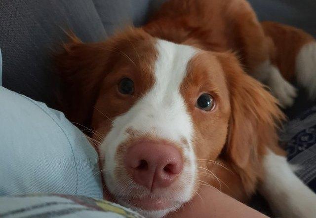 dog looking sweetly at camera