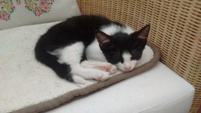 black and white kitten sleeping
