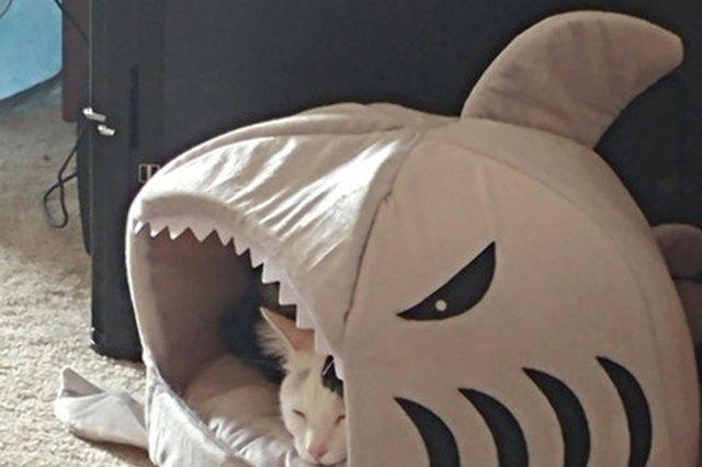 cat sleeping in shark bed