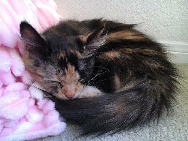 small kitten sleeping next to pink blanket
