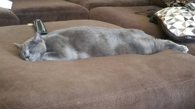 cat sleeping stretched out