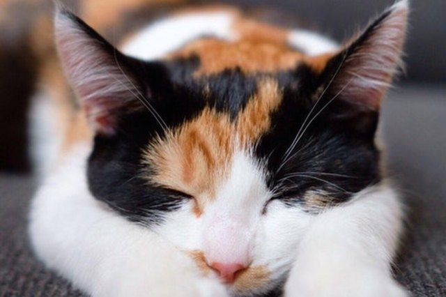 orange and black sleeping cat
